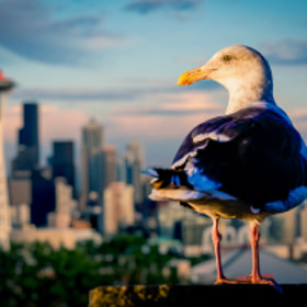 Seagull in Seattle by Nicole S. Young (nicolesy)) on 500px.com