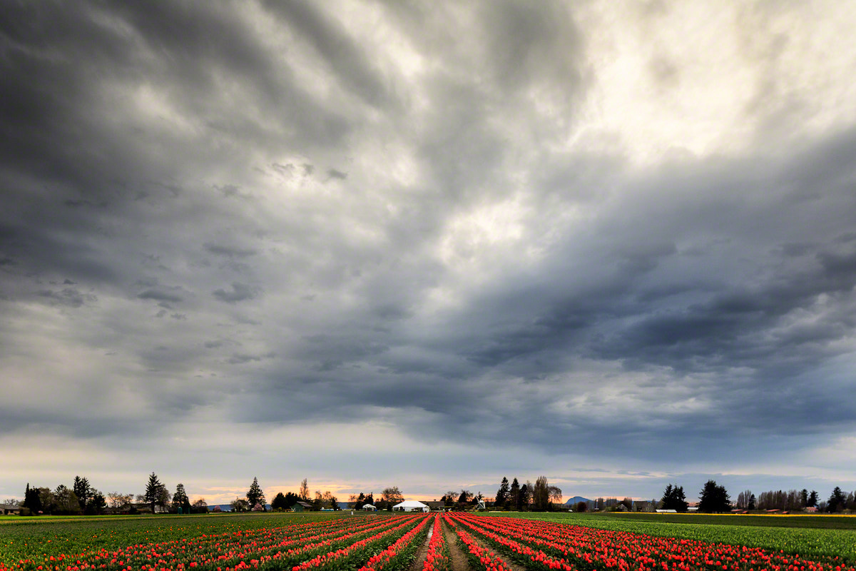Photograph A Field of Clouds by Nicole S. Young on 500px