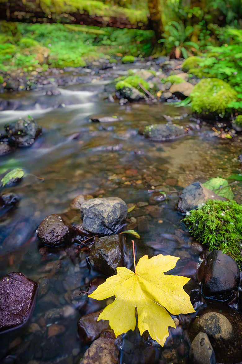 Photograph Yellow Leaf at Ruckel Creek Falls by Nicole S. Young on 500px