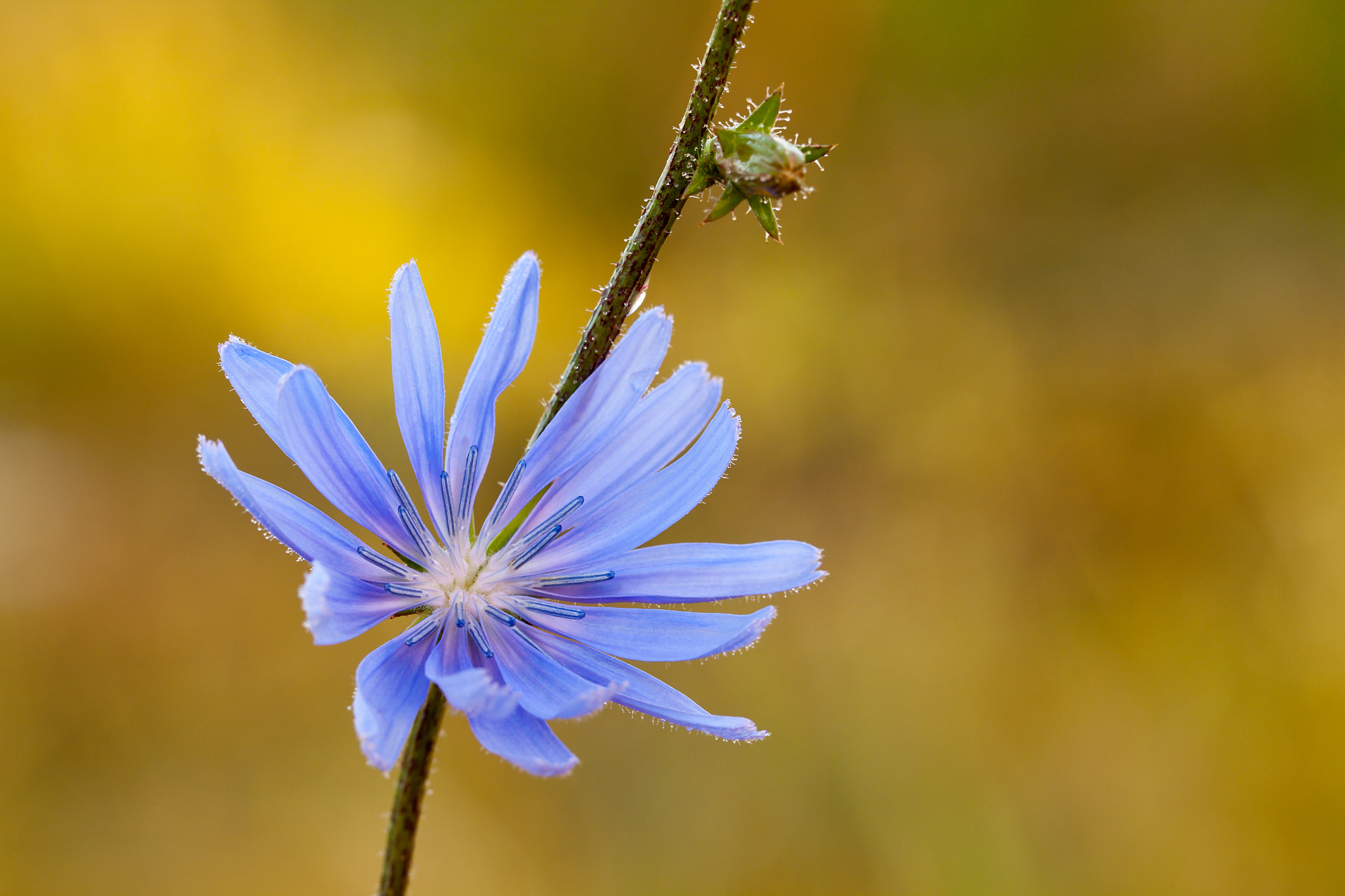 Photograph One flower by Thomas Forysiak on 500px