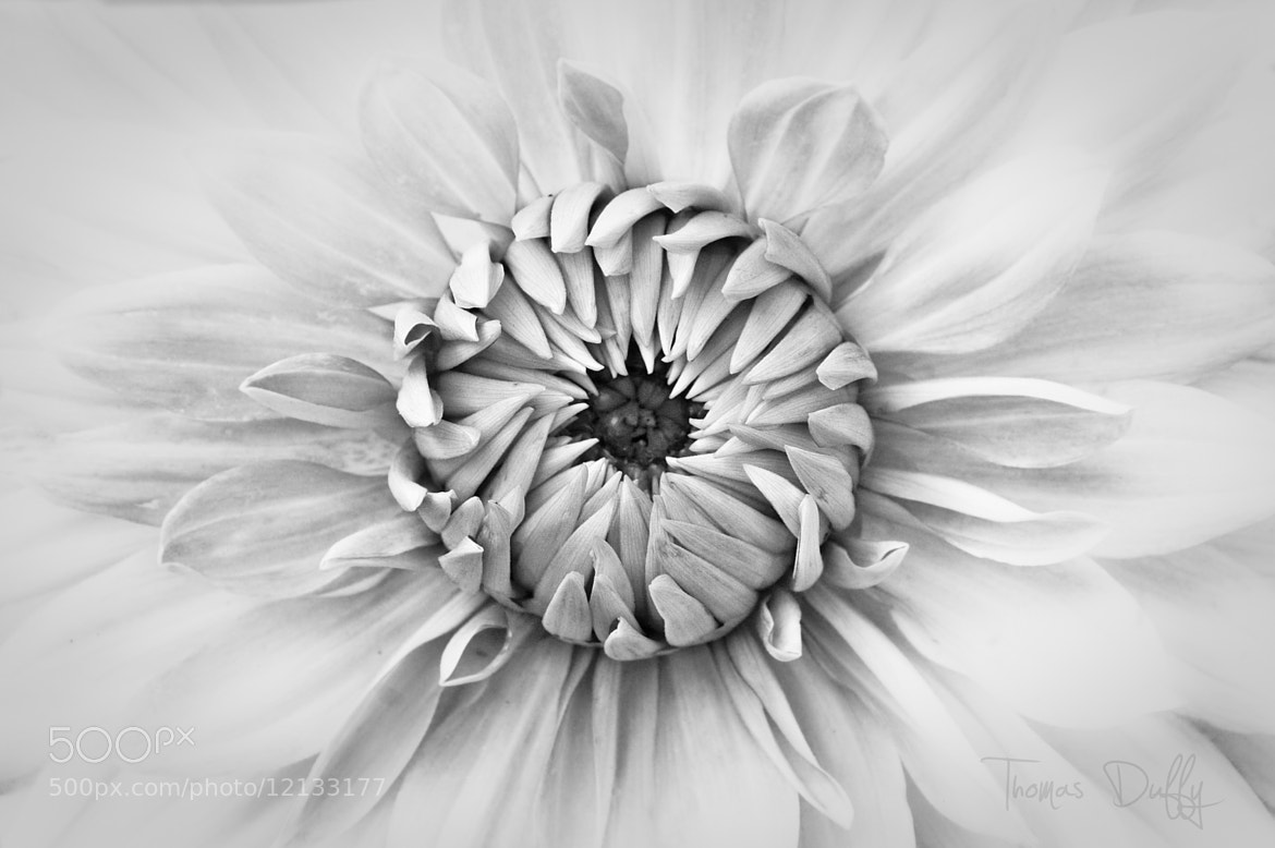 Photograph White and Black by Thomas Duffy on 500px