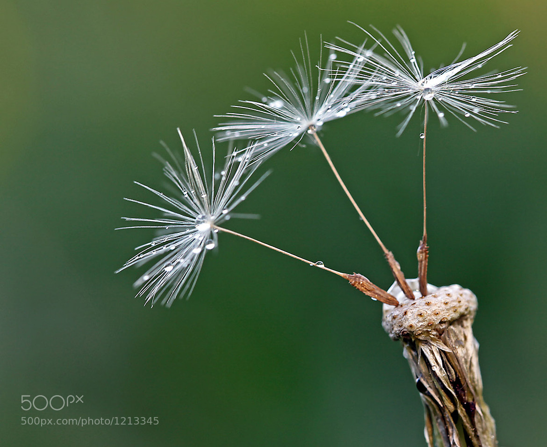 Photograph Art of Nature.........V by Marinus Keyzer de on 500px