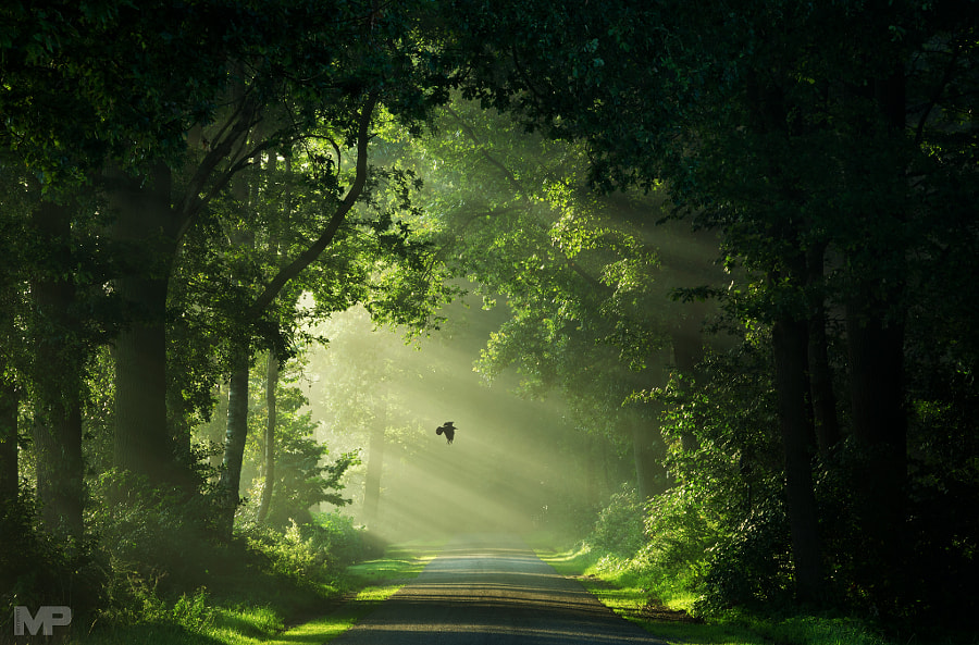 Path to the Secret Garden by Martin Podt on 500px.com