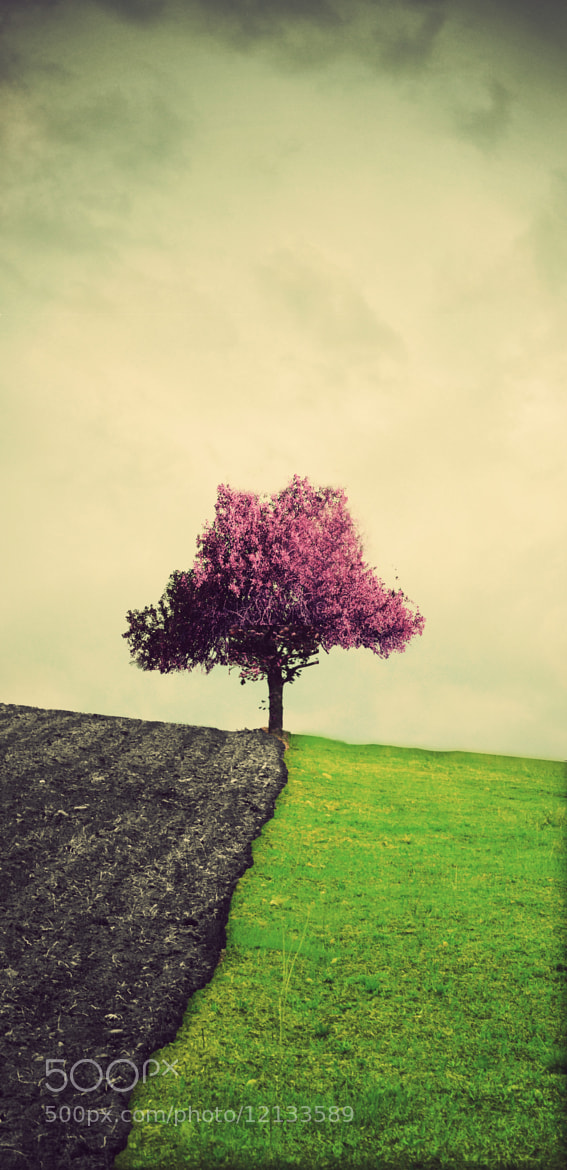 Photograph lonely tree by Adrian Limani on 500px