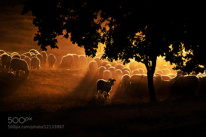 Photograph The Herd by Guy Cohen on 500px