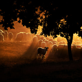 The Herd by Guy Cohen (guy_santos)) on 500px.com