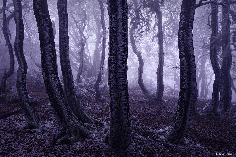Photograph Trees Can Dance by Kilian Schönberger on 500px