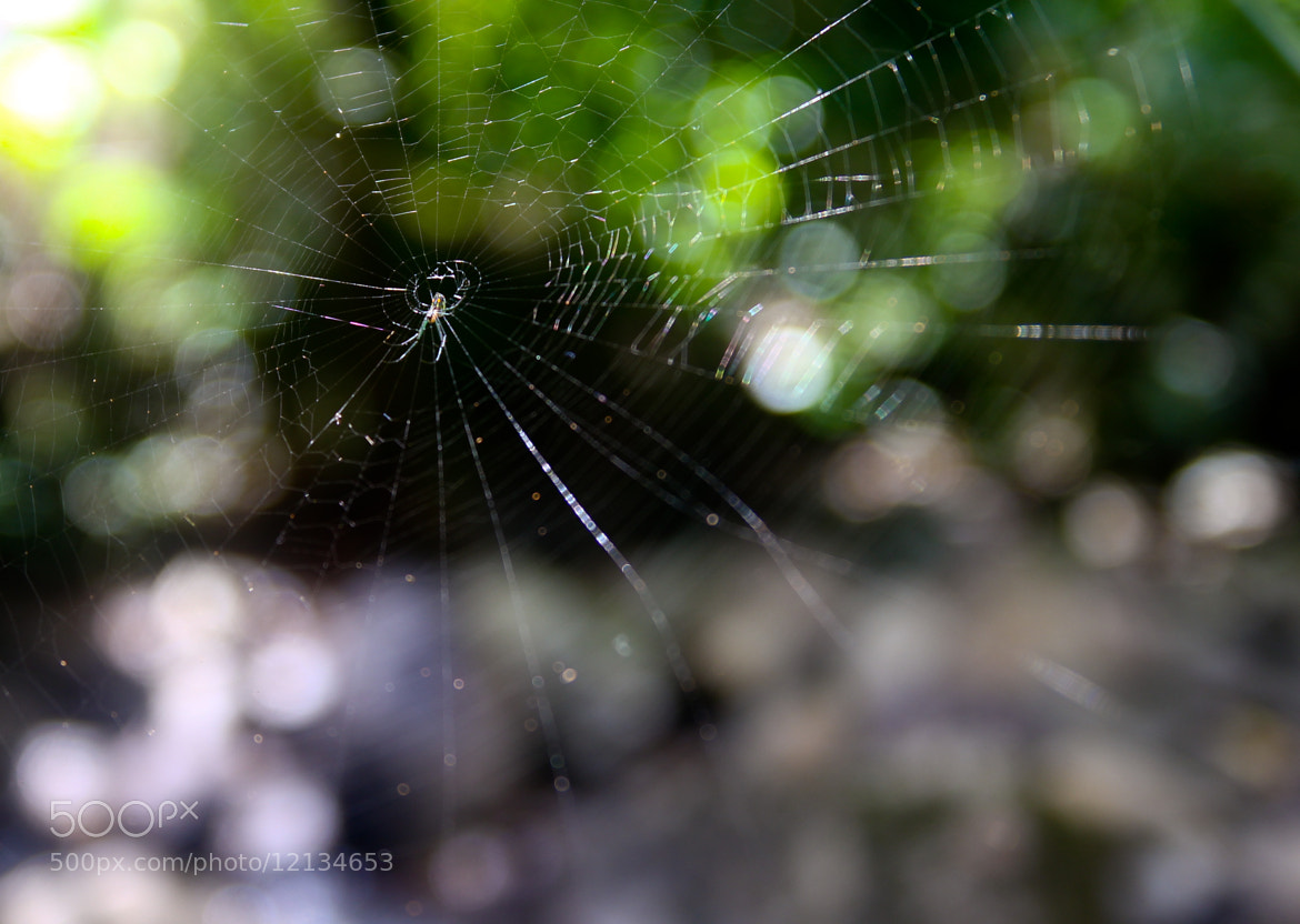 Photograph Spider by Zach Becker on 500px