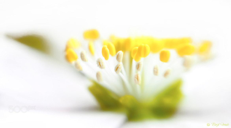 Photograph I had a dream by Birgit Franik on 500px