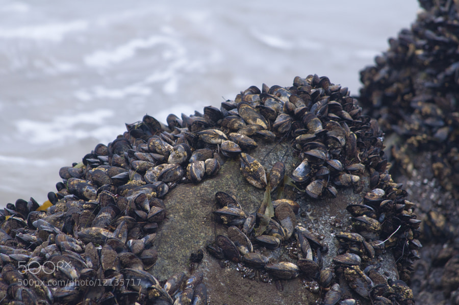 Photograph Mussel Beach by Chris Hogan on 500px