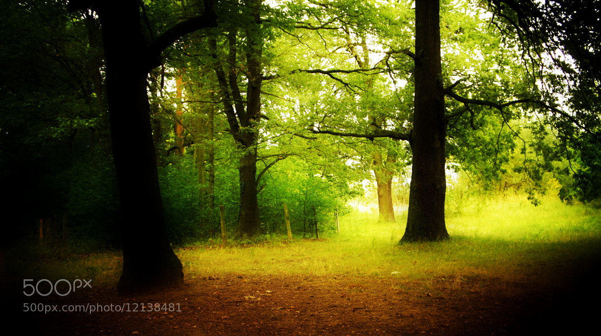 Photograph forest by Hiwa  on 500px