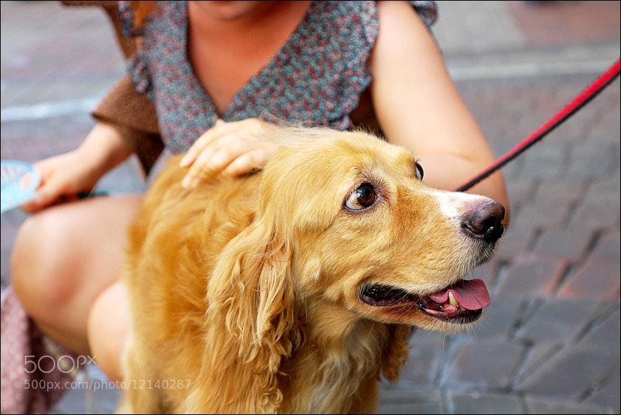 Photograph Nice dog by D W Kim on 500px