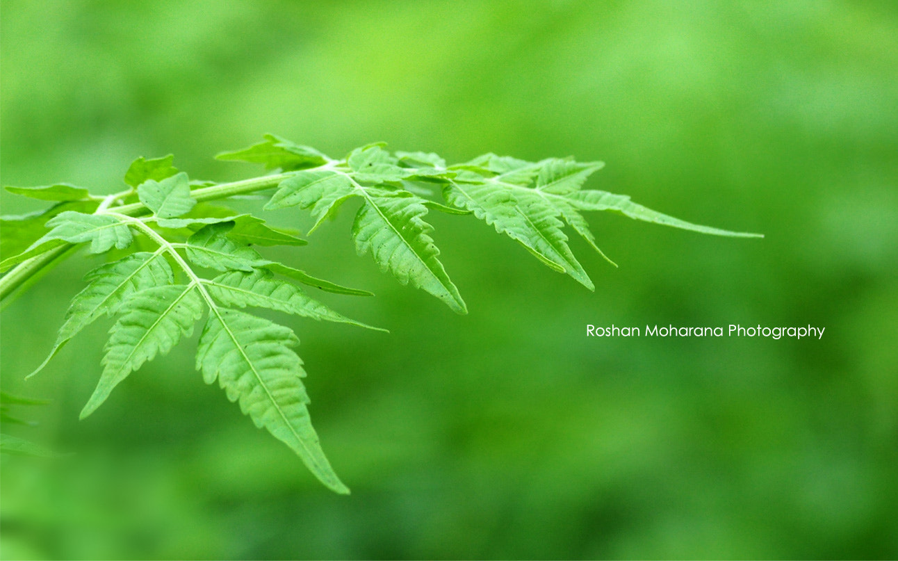 Photograph Green  by Roshan Moharana on 500px