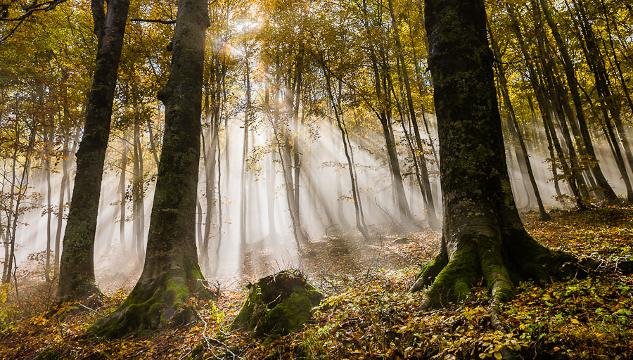 Photograph Lightrays by Hans Kruse on 500px