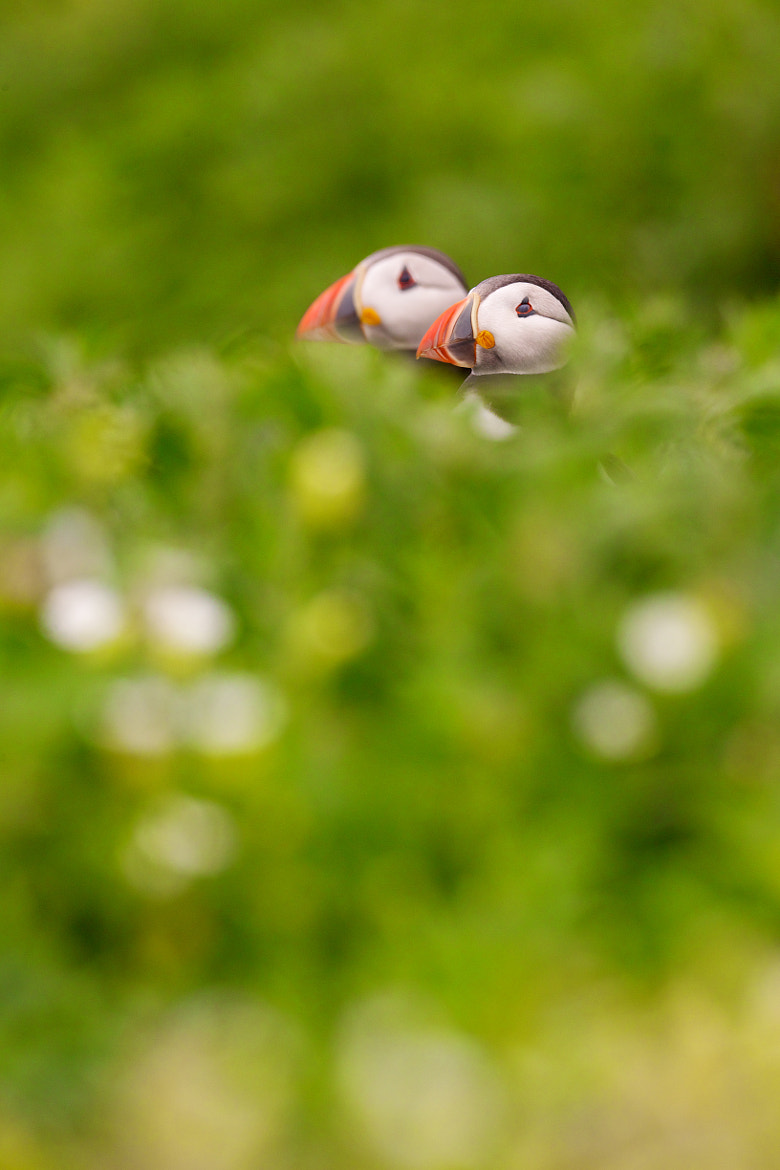Photograph I spy with my little eye... by David Fidler on 500px