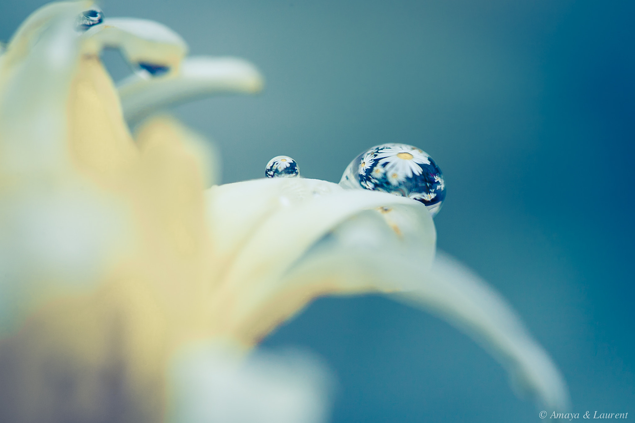 Photograph flower tears by Amaya Bercetche on 500px