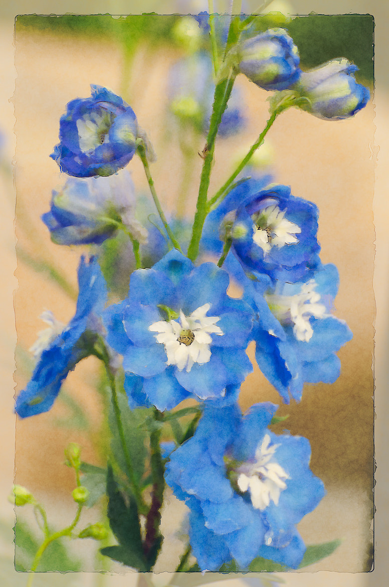Photograph Blue Blooms by Debra Keller on 500px