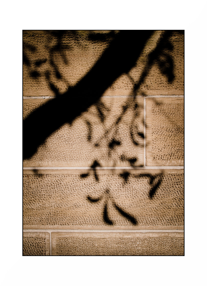 Photograph Hikage (Shadow) by Hartmut Haerer on 500px