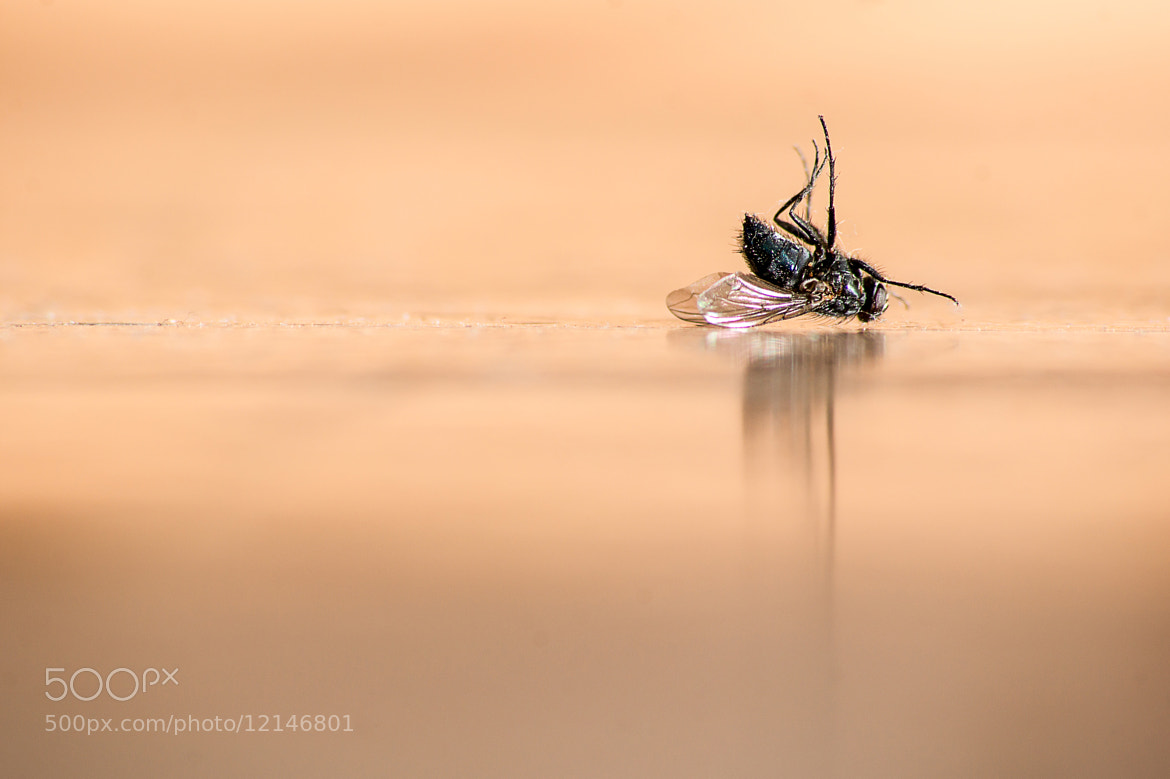 Photograph Dead Fly by Samuel Boivin on 500px