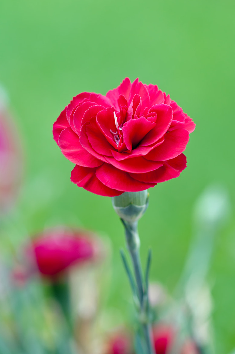 Photograph A flower in the garden by Michael Eggers on 500px