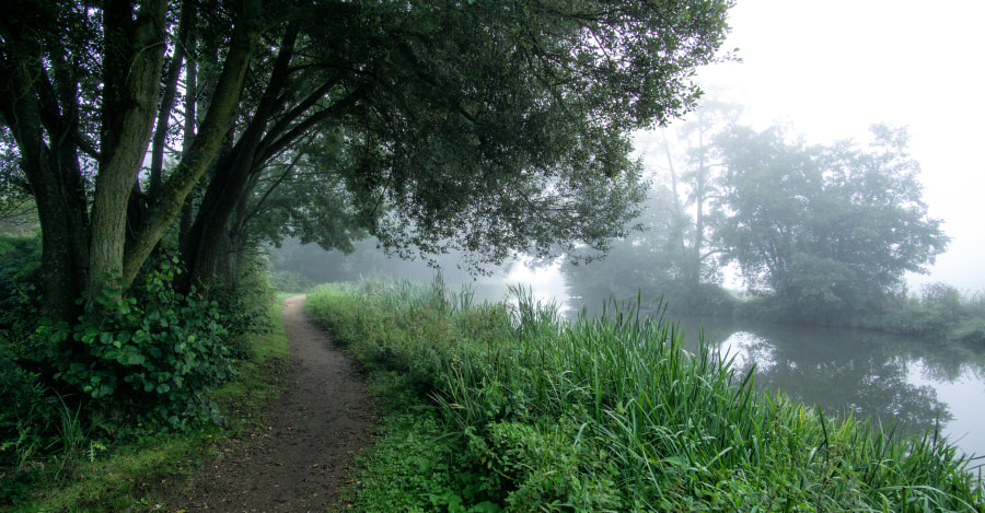 Misty Morning - River Wey