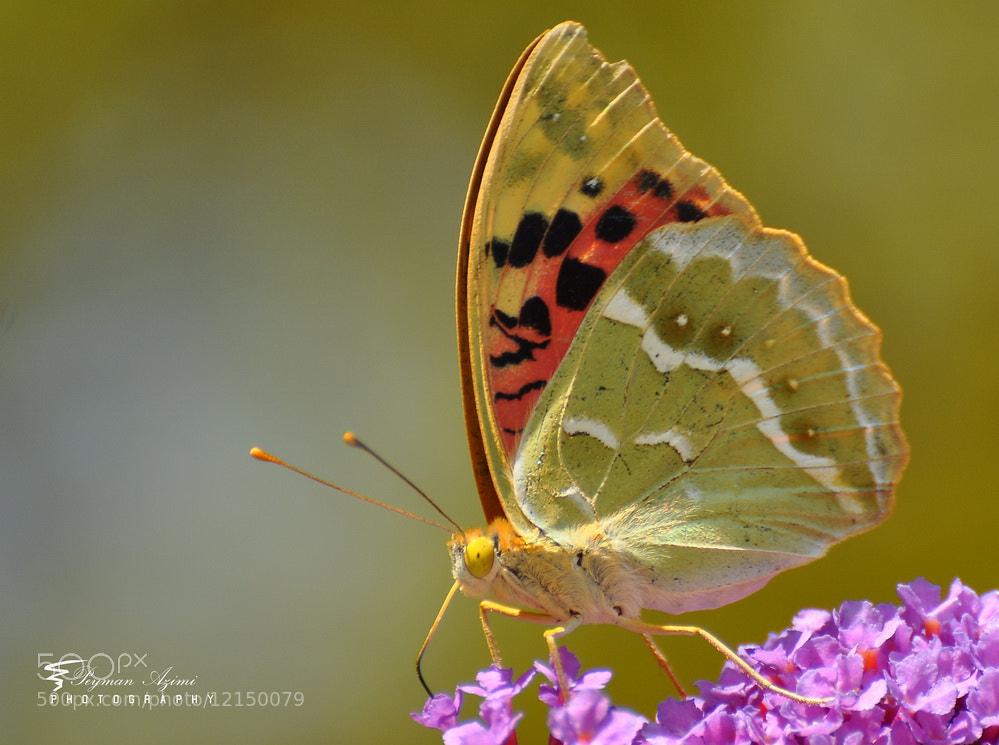 Photograph )i( 2 by Peyman Az on 500px