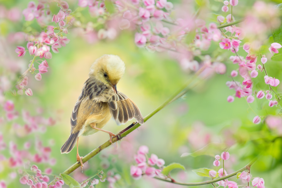 ? Leisure Time ? by FuYi Chen on 500px.com