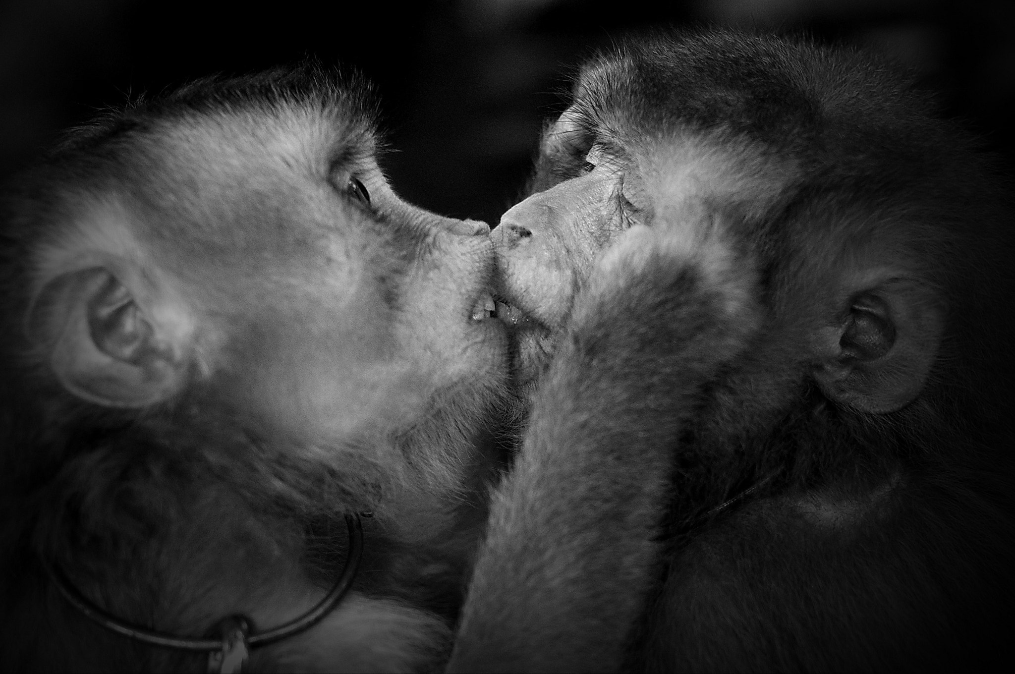 Photograph Loving you by Nguyễn Duy Anh on 500px