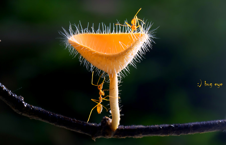 Photograph Ant Explorer by bug eye :) on 500px