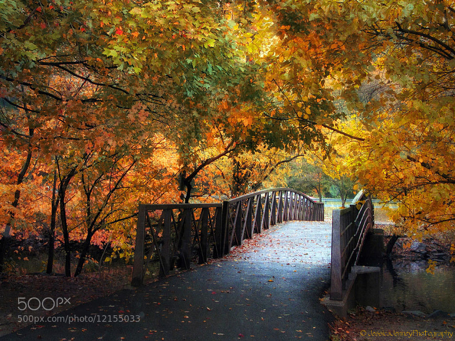 Photograph Autumn Overpass by Jessica Jenney on 500px