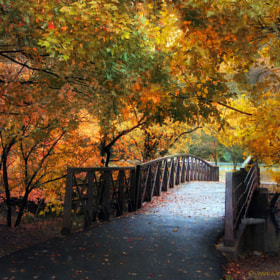 Autumn Overpass by Jessica Jenney (jjenney)) on 500px.com