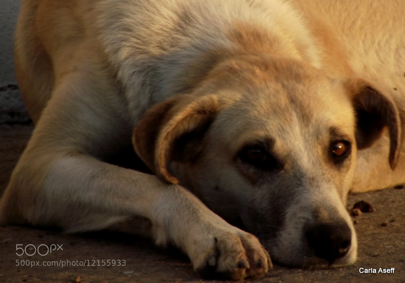 Photograph Dog | On the road by Carla Aseff on 500px