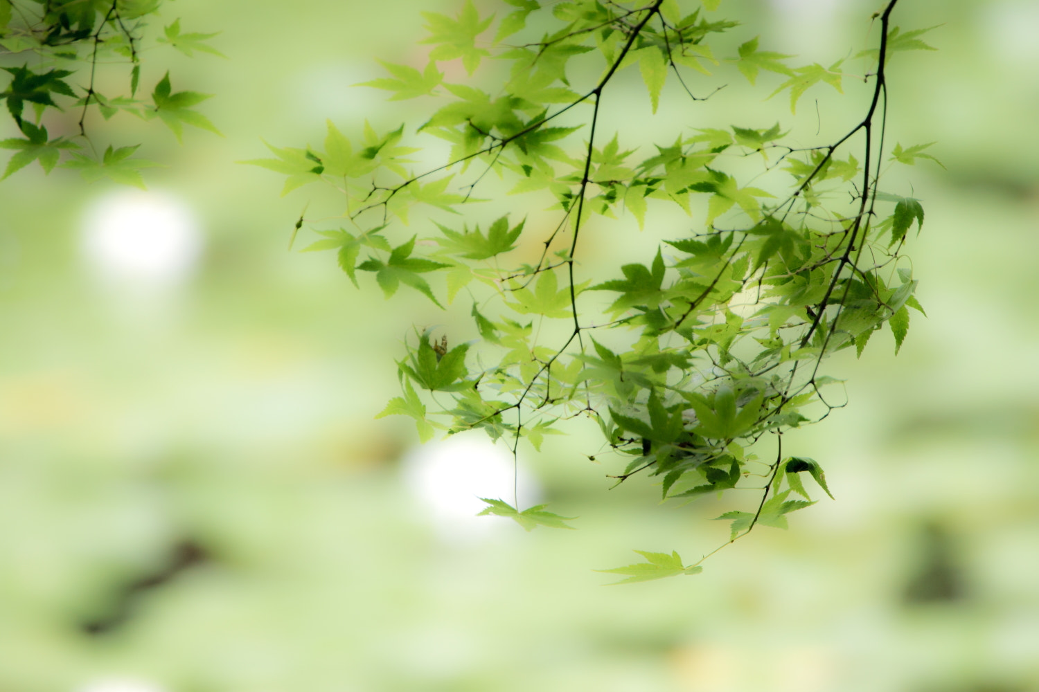 Photograph On the wind ..green.. by Takeshi Marumoto on 500px