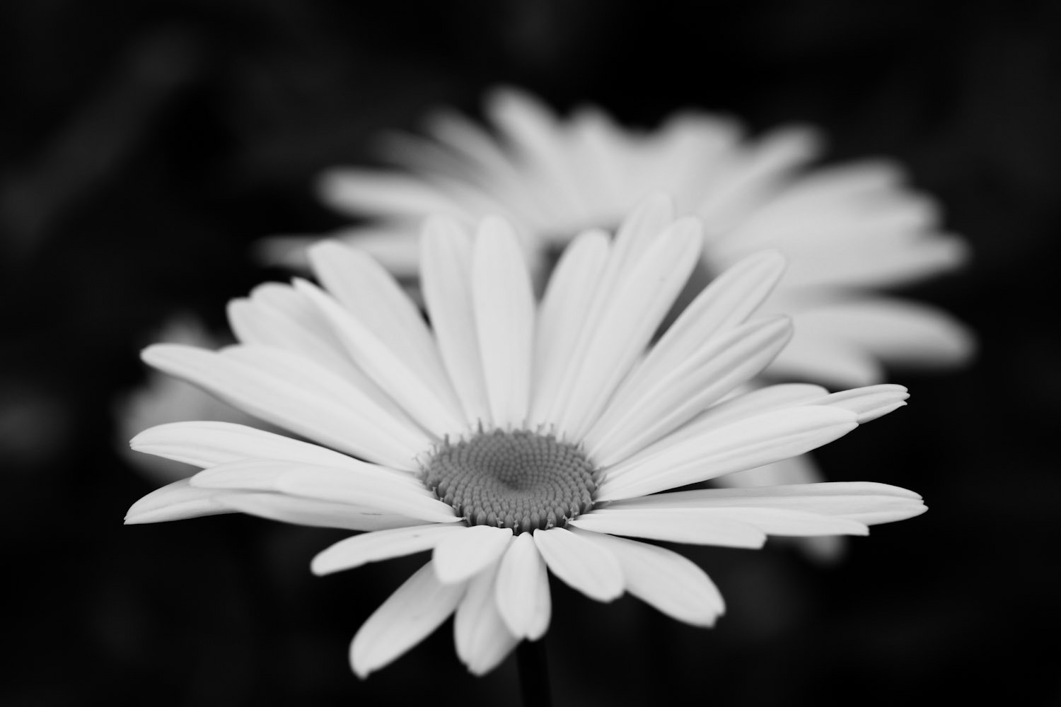 Photograph Daisies by Mark Prince on 500px
