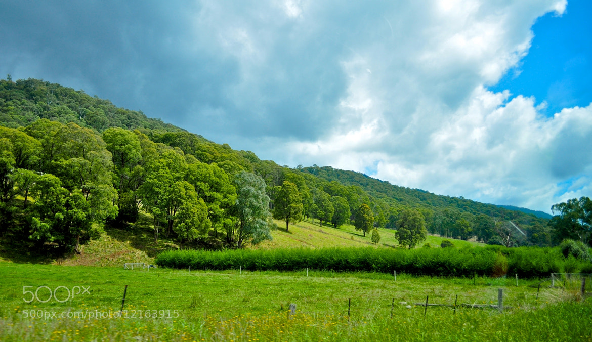Photograph Green by Ajay Reddy on 500px