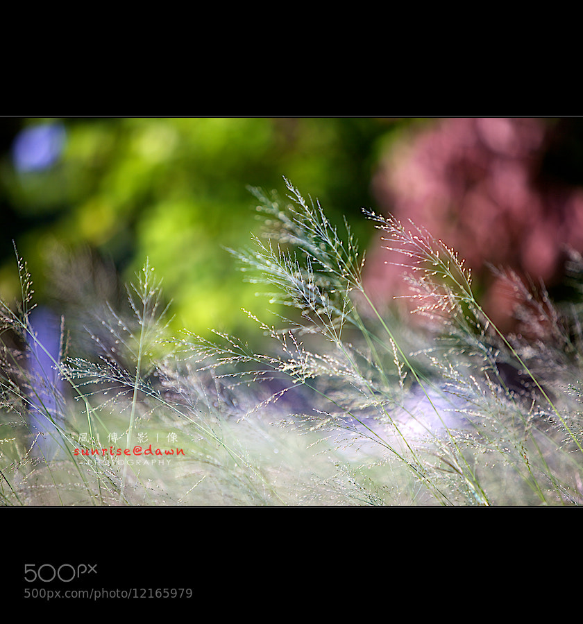 Photograph    light and shade by SUNRISE@DAWN photography 風傳影像 on 500px