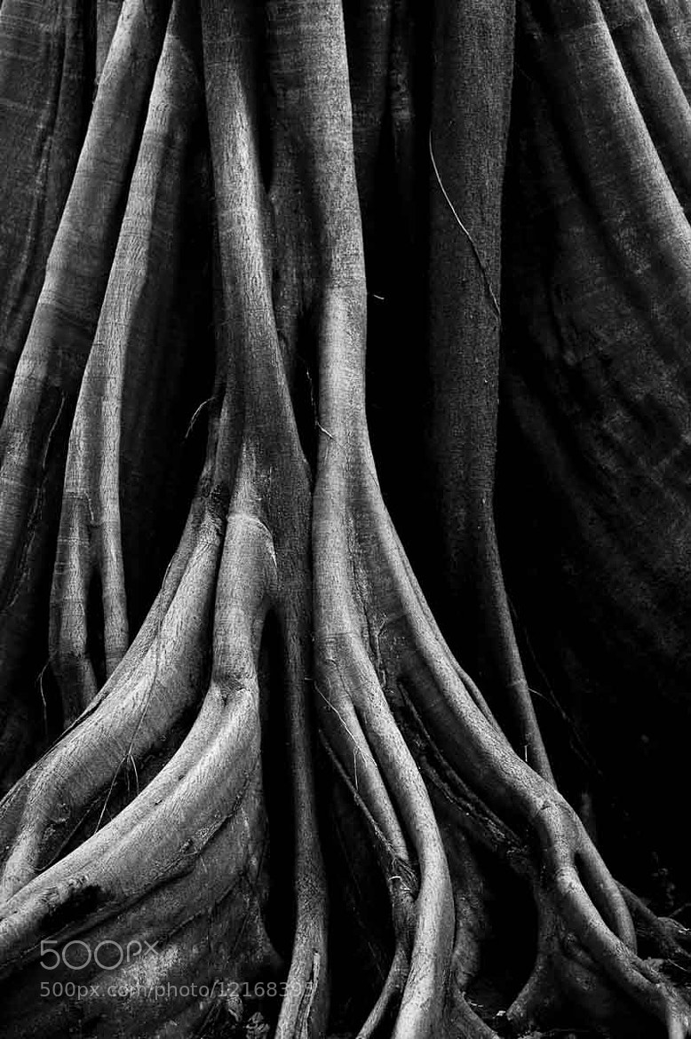 Photograph Roots by Laura de Graaff on 500px