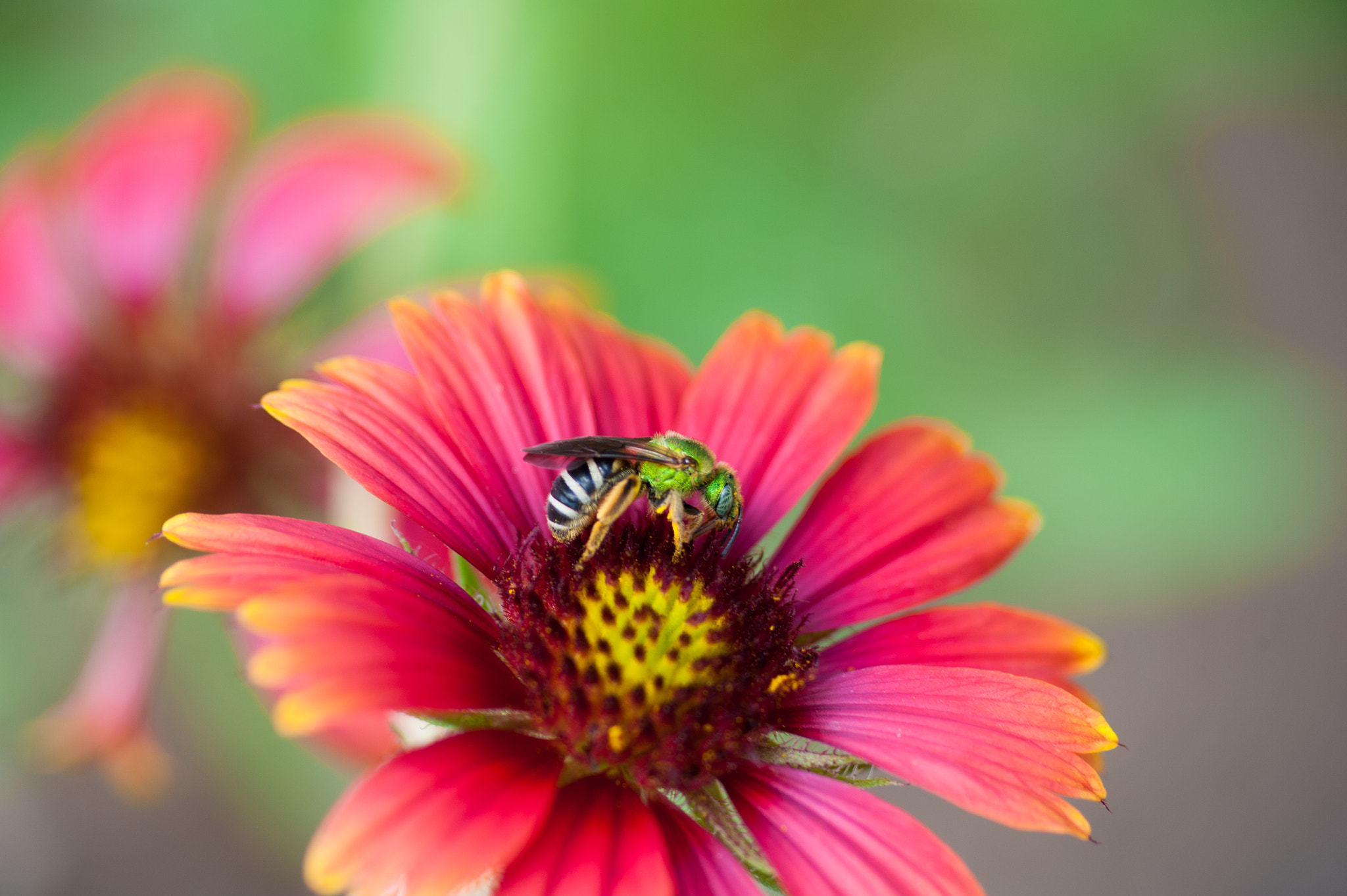 Photograph Flower & Wasp by John Kennington on 500px