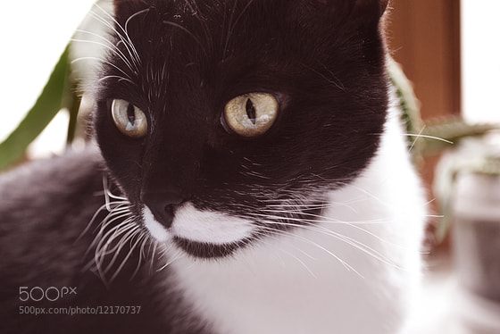Photograph lovecats :з by Alisha Dystopia on 500px
