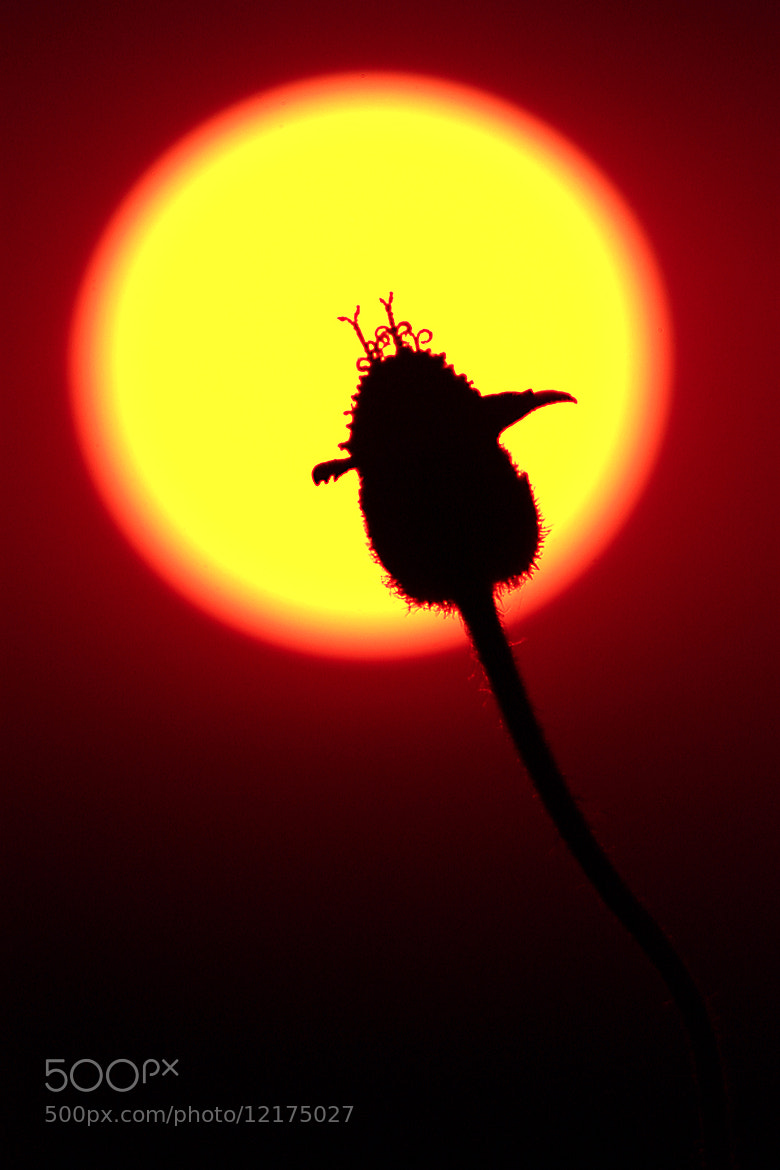 Photograph silhouette by Siriwat Wongchana on 500px