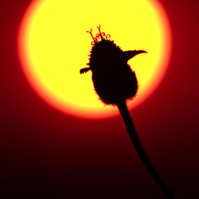 silhouette by Siriwat Wongchana (siriwat)) on 500px.com