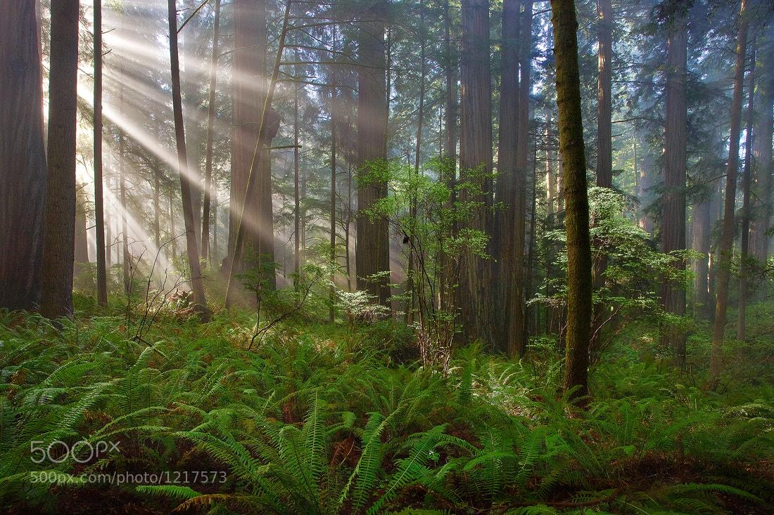 Photograph Chosen... by Jeremy Cram on 500px