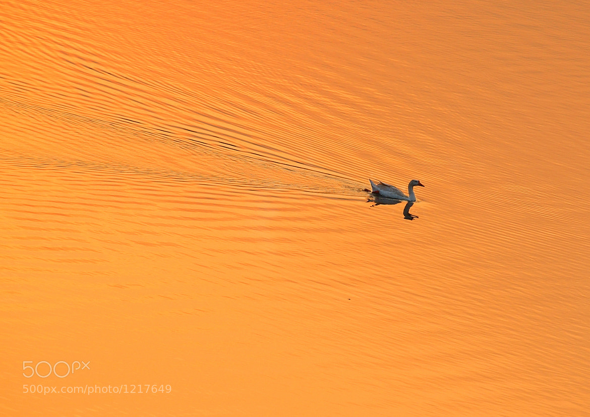 Photograph Cross The Lake by Eka Novianto on 500px