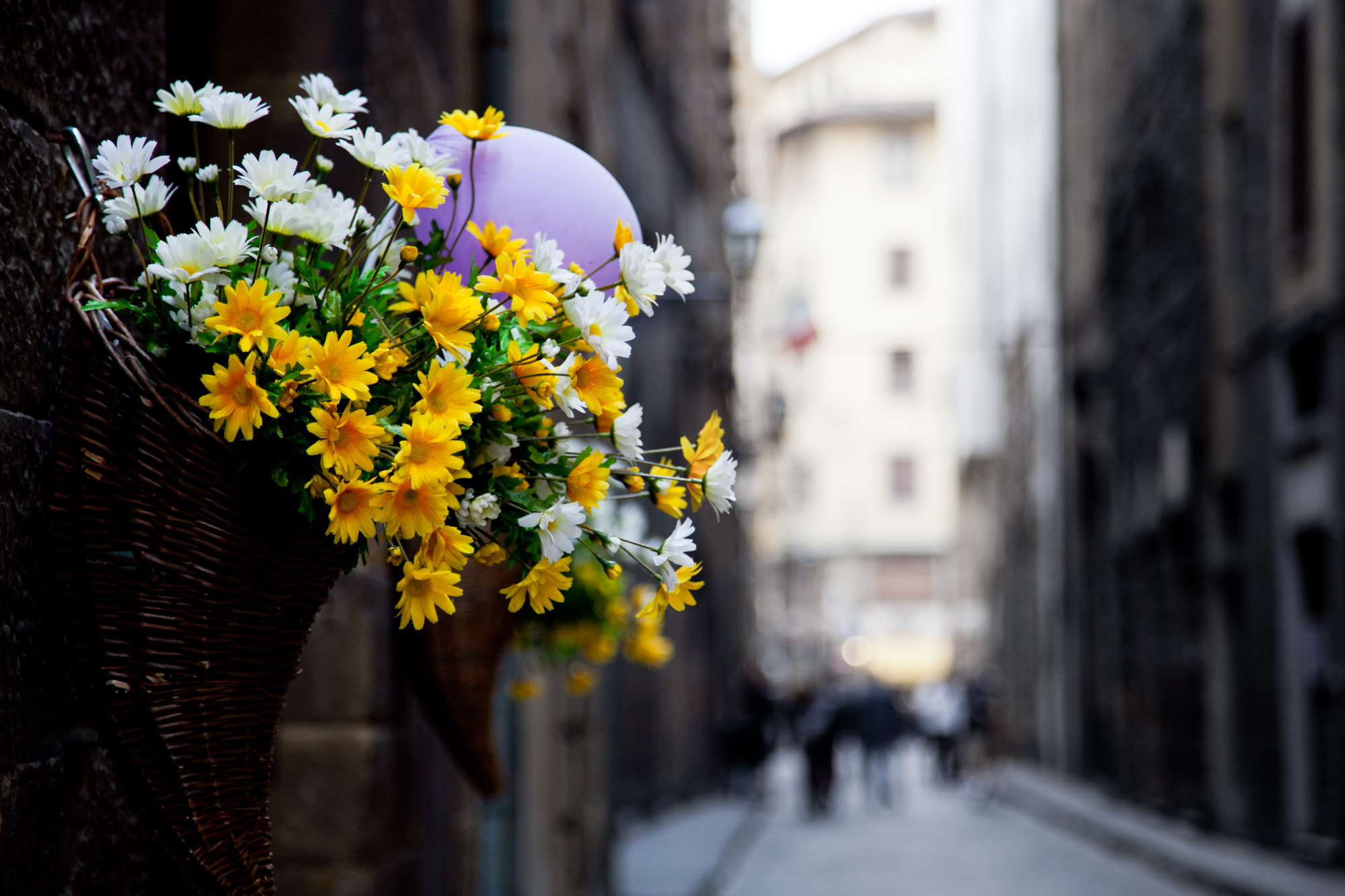 Photograph Flowers in Italy by Mark Prince on 500px