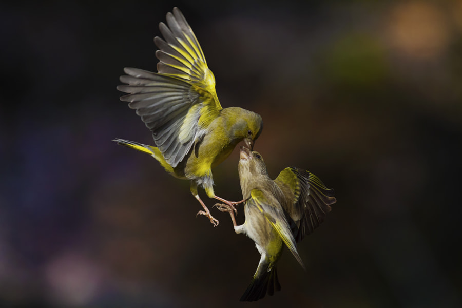 Flying Kiss on the forehead by Marco Redaelli on 500px.com