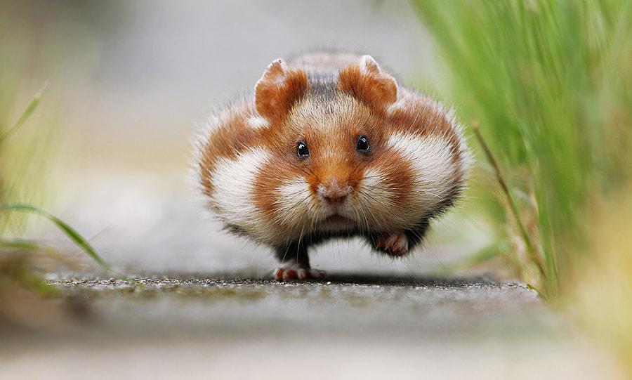 Chubby Cheeks by Julian Rad on 500px.com