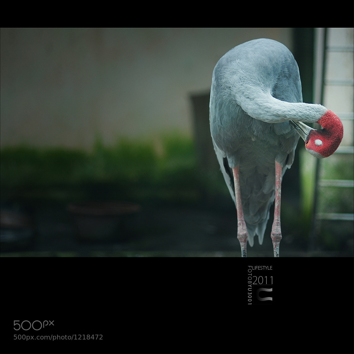 Photograph Untitled by yu3001 on 500px
