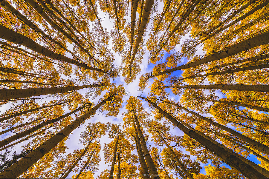 Photograph Looking Up by Peter Coskun Nature Photography  on 500px