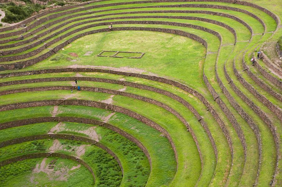 Moray Circles