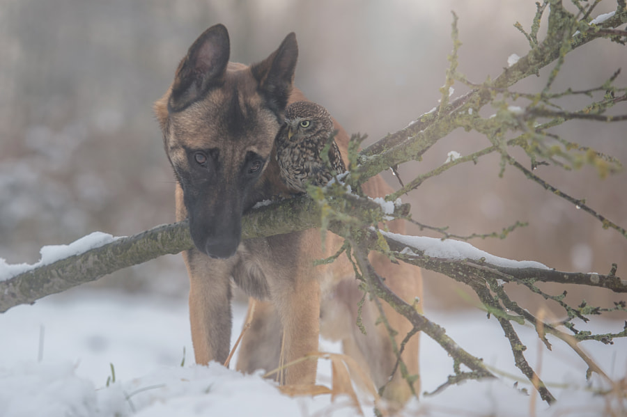 Silence by Tanja Brandt on 500px.com